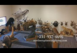 Sportsman Extravaganza Northern Pines Taxidermy